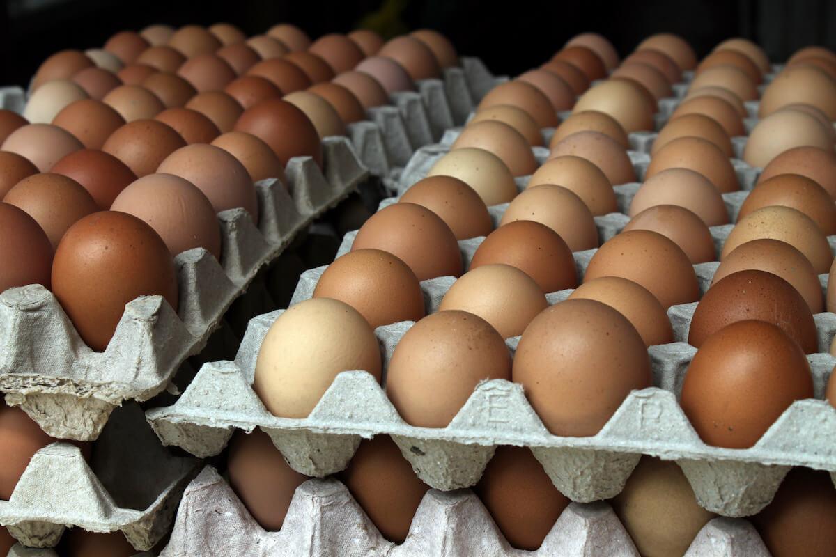 Яйцо из стаб. фонда